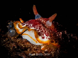 nudibranch by Mark Reilly