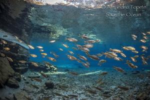 Golden Fish, Las Estacas México by Alejandro Topete