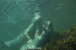 Tickling seal. Taken at Farne Islands, UK. by Andy Colls