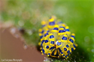 No crop shot taken with Canon 70d, 100mm macro lens and N... by Iyad Suleyman