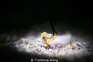 SULTAN