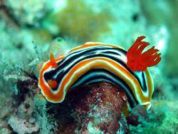 Taken at Mantabuan Island, East Malaysia by Dennis Siau