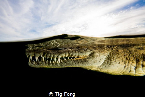 What Lurks Beneath - American Crocodile at Gardens of the... by Tig Fong