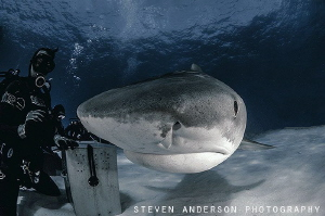 diving in the presence of beauty!!!! by Steven Anderson