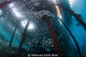 Arborek pier, Raja Ampat. by Mehmet Salih Bilal