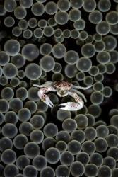 Bubble bath Location :Dumaguete Philippines Canon 5d3 ... by Yung Sen Wu