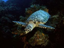 This photo was taken in 2005 , while diving in Cozumel. I... by Steven Anderson
