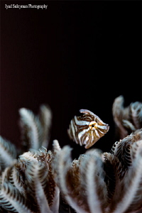 Filefish by Iyad Suleyman