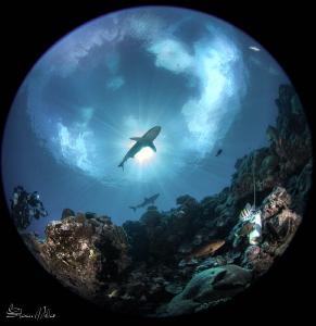 Starburst.  Calm seas, clear skies, and killer viz by Steven Miller