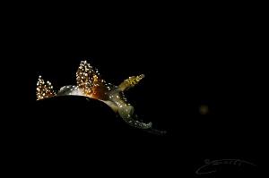 ~ Starry Night ~ by Geo Cloete