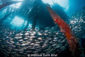 Arborek, Raja Ampat. Nikon D7200+ Tokina 10-17, at 10 mm ... by Mehmet Salih Bilal