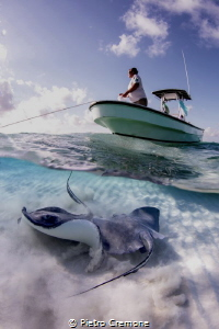 Stingrays and boatman by Pietro Cremone