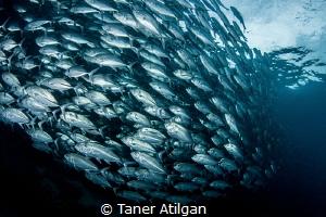 Jackfish train by Taner Atilgan