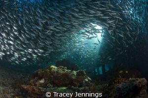 Under the jetty by Tracey Jennings