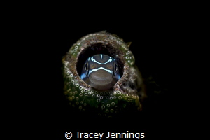 Anyone home? by Tracey Jennings