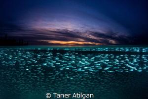 Silversides at sunset by Taner Atilgan