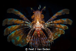 I have wings, if I could only fly by Peet J Van Eeden