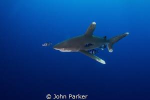 Head On Oceanic by John Parker