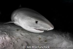Keeping a watchful eye in the dark...She seemed to be wat... by Jim Machinchick