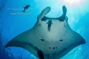 Mantaray with sun, San Benedicto México by Alejandro Topete