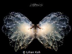 BUTTERFLY by Lilian Koh