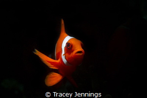 I used a snoot to isolate only the fish. by Tracey Jennings