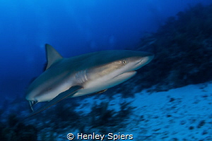 Shark Speed by Henley Spiers