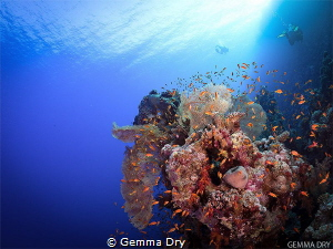 Something totally out of my comfort zone!  Diving in the ... by Gemma Dry