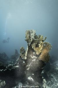 corals by Antonio Venturelli