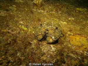 In the he crab family but first time I have seen one , st... by Helen Hansen