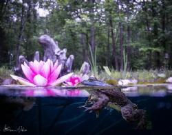 Lilly lover by Steven Miller