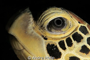 """""""Like a look in the depth of the universe"""" - The Eye of a... by Andre Philip"""