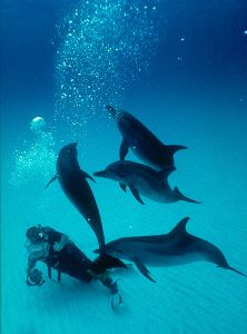 Spotted Dolphins, Bahamas  Nikon F4, 18mm, Aquatica by Andrew Dawson