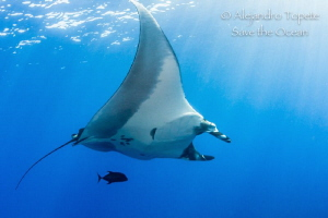 Mantaray with Sun Rays by Alejandro Topete