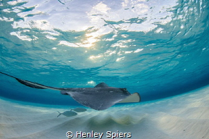 Stingray Magic by Henley Spiers