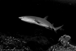 Black tip by Pietro Cremone