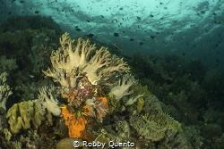 Taken around Tomia Island, Wakatobi, Sulawesi, Indonesia. by Robby Quento
