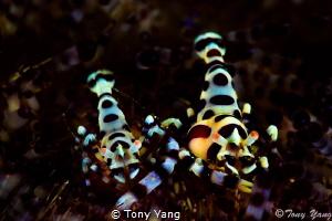 Parasite by Tony Yang