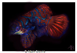 Diving Raja Ampat - ambon my first ever mandarin fish. G1... by Adam Browne