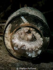 Hideaway ... Coconut Octopus - Amphioctopus marginatus ... by Stefan Follows