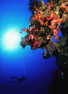 Fiji Reef  Nikon F4, 18mm, Aquatica, Ikelite strobes by Andrew Dawson