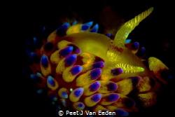 The Third Eye by Peet J Van Eeden