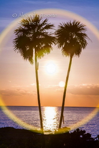 Palms with Sun, Cozumel México by Alejandro Topete