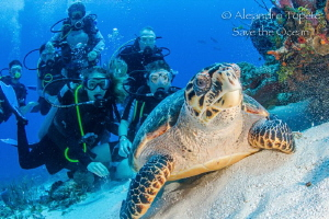 Turtle and Divers, Cozumel Mexico by Alejandro Topete