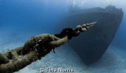 Kittiwake Shipwreck by Tina Norris
