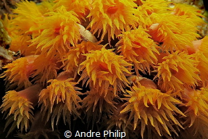 Sun Coral at night by Andre Philip