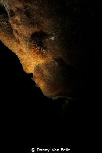 Lurking in the dark by Danny Van Belle