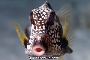 I was diving on Buddy'S Reef in Bonaire shooting with my ... by Andrew Jalbert
