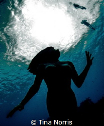 Mermaid looking upward to diver silhouettes by Tina Norris