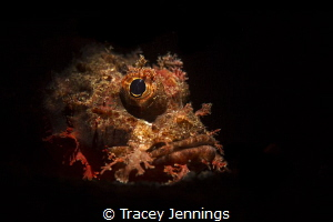 A portrait of a scorpion fish in Bali by Tracey Jennings